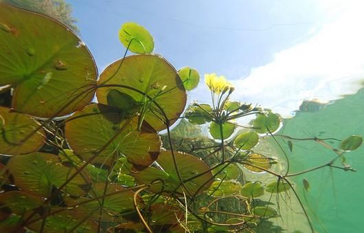 vodni rostliny v jezirku